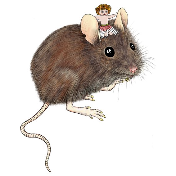 mouse children's picture book illustrated by NZ artist Fiona Whyte